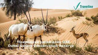 Природний заповідник Dubai Desert Conservation Reserve відкритий для відвідування