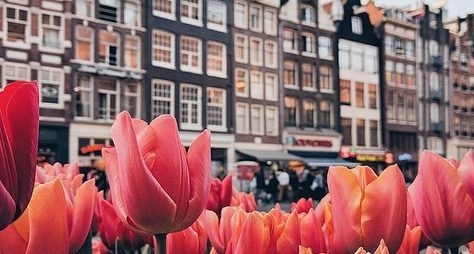 Амстердам снуля