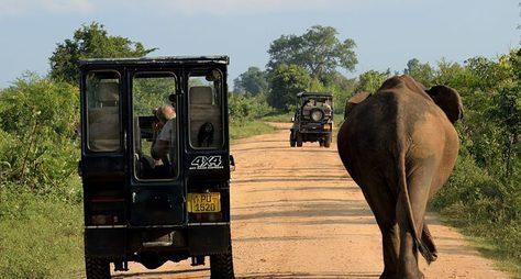 Мозаика Шри-Ланки: сафари, форт Галле идрагоценные камни