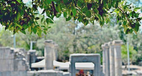 Ботаническая экскурсия поТель-Авиву. История озеленения города